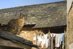 Cat on the roof Royalty Free Stock Photography