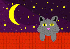 Cat on roof. In night under stars Stock Image