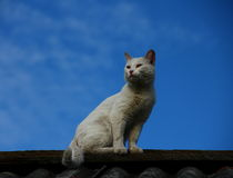 Cat. On the roof against blue sky Stock Image