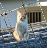 Cat on a roof basking. Ordinary cat in afternoon sun Royalty Free Stock Photo