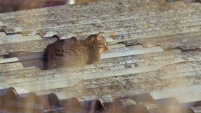 Cat on a roof. Cat being lazy on a roof stock video footage