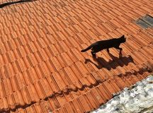 Cat on the roof Stock Image