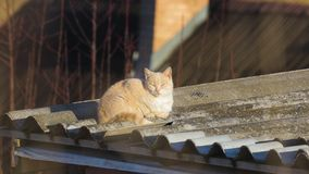 Cat on a roof. Cat being lazy on a roof in the sunlight stock footage