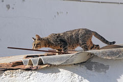 Cat on the roof royalty free stock image