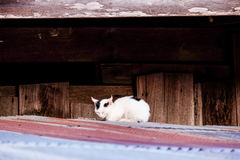 Cat on a roof Royalty Free Stock Photo