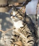 Cat on the roof of a house on nature.  Royalty Free Stock Photography