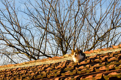 Cat on roof Royalty Free Stock Photos