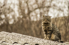 Cat on roof Stock Photos