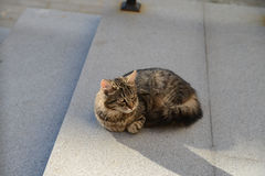 Cat on the roof in Minsk Stock Photo