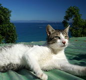 Cat on a Roof in Morocco Stock Image