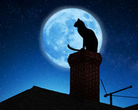 Cat on a roof. Cat on the roof at night Royalty Free Stock Image