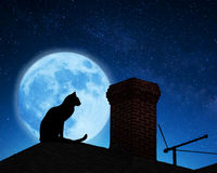 Cat on a roof. Royalty Free Stock Photo