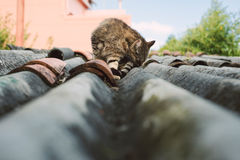 Cat on a roof outdoors Royalty Free Stock Image