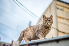 Cat on the roof Royalty Free Stock Photos