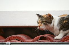 Cat on a roof Royalty Free Stock Image