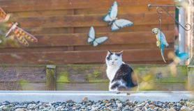 Cat on the roof of a shed in sunlight. In winter Stock Images