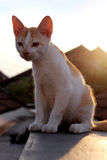 A cat on the roof top royalty free stock photo