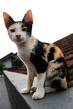 A cat on the roof top stock photography