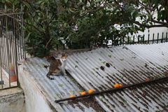 Cat on roof top stock images