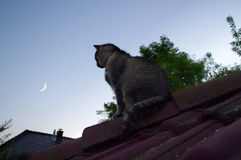 Cat on roof watching for the Moon Stock Photography