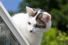 Cat on Rooftop Royalty Free Stock Photos