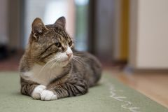 Cat in room isolated. With blurred background Stock Photos
