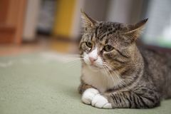 Cat in room isolated. With blurred background Royalty Free Stock Photos