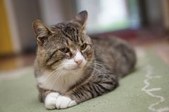 Cat in room isolated. With blurred background Stock Image