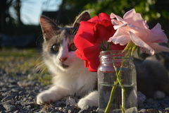 Cat and roses. Cat hiding behind a vase of roses Stock Photography