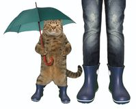 Cat in rubber boots 2. The cat with an umbrella cane and a girl are both wearing in blue rubber boots. White background stock photo