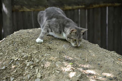The cat rubs against the hillock. A young cat rubs against the stone surface of the hillock royalty free stock image