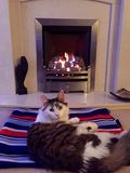 Cat on a rug in front of a fire. Cat sat on a blanket in front of a fireplace Royalty Free Stock Photo