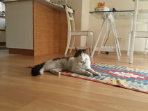 Cat on Rug. Cat is lying on a traditional Turkish rug Royalty Free Stock Photos
