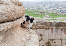 Cat in ruin of f ancient city Jerash Stock Photo