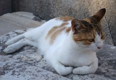 Cat in ruins Ephesus in Turkey Royalty Free Stock Images