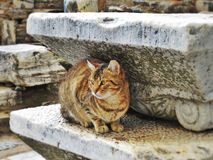 Cat in the ruins Royalty Free Stock Images