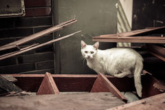 Cat in ruins Royalty Free Stock Photo