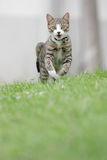 Cat is running Stock Image