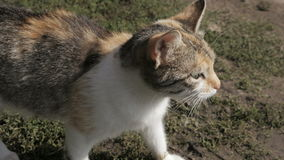 Cat running on the grass stock video footage