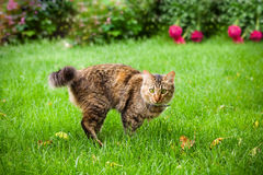 Cat is running on green grass Stock Images