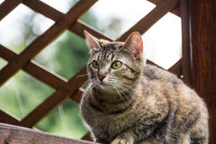 Cat running nature. The cat looks out a sacrifice royalty free stock photos