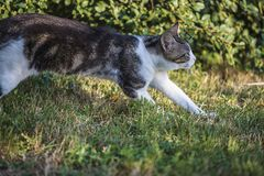Cat running on sunny day Stock Images