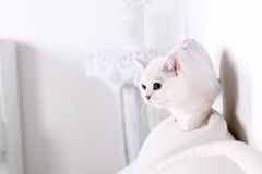The cat runs away looking at the back of the sofa Stock Images