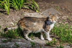 cat runs on a lawn Stock Photo