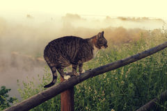 Cat in rural landscape Royalty Free Stock Photography