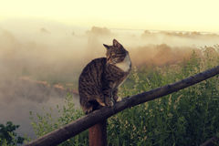 Cat in rural landscape. The cat is a popular pet on the background of a wide and magical landscape with a river of forest fogged in the mist. Spring or summer in Royalty Free Stock Images