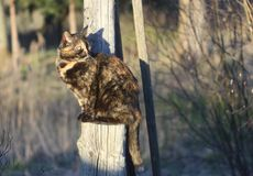 Cat living on the rural yard Royalty Free Stock Photos