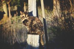 Cat living on the rural yard Royalty Free Stock Image