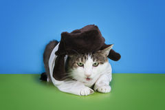 Cat in the Russian national dress on a colored background isolat Stock Photos