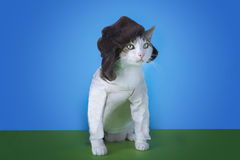 Cat in the Russian national dress on a colored background isolat Royalty Free Stock Images
